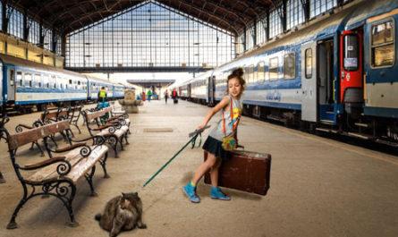 животные в поезде